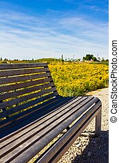 Wooden Bench In Spring