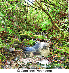 Native bush - Stream among New Zealand native bush