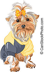 vector pedigreed dog Yorkshire terrier sitting - color...