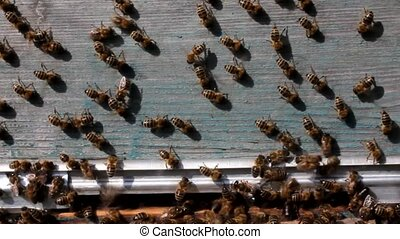 Bees in hot weather - Bees are constantly moving. They...