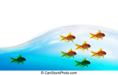 goldfish follower on water background, unique and diffrent business concept
