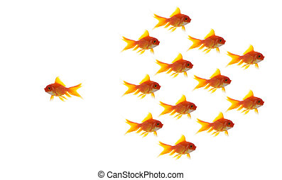 goldfish group leader isolated on white background, unique and diffrent business concept