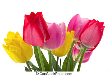 Tulips - Elegant yellow, red and pink tulips