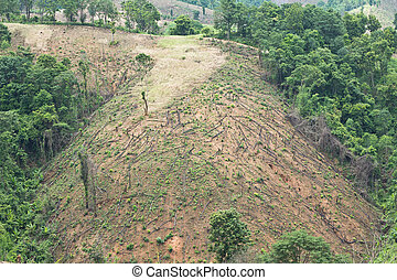 Deforestation - Forest cut down
