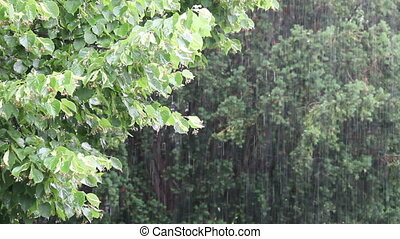 Pouring Rain - Down pour of rain on Linden tree