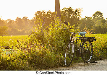 bicycle at sunny day and grass field