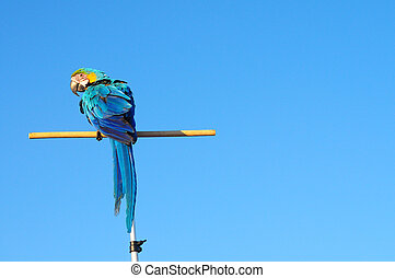 Colorful parrot with blue sky