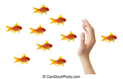 goldfish leader on white background, unique and diffrent business concept