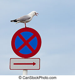Seagull perched beak open on no stopping roadsign