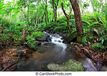 cascata, quedas, sobre, mossy, pedras