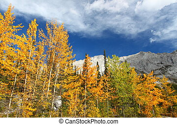 Autumn in the Canadian Rockies - Autumn colors below blue...