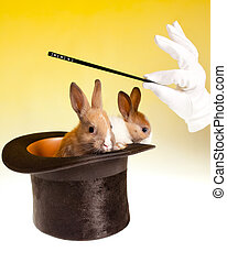 Rabbit magic trick in top hat - Magic wand and magician's...