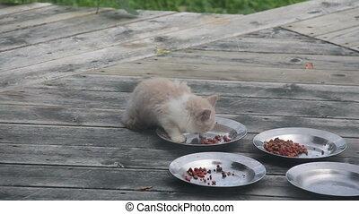 Feral Kitten Eats - Feral Kitten, about 12 weeks old, eats...