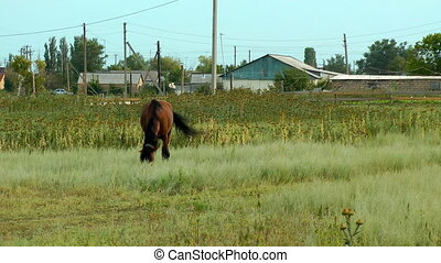 Alone horse eating at a rural field