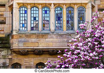 Yale University Magnolia Windows Reflection
