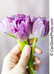 Hand holding bouquet of three purple tulips - Womens hand...