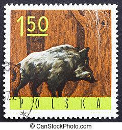 Postage stamp Poland 1965 Wild Boar - POLAND - CIRCA 1965: a...