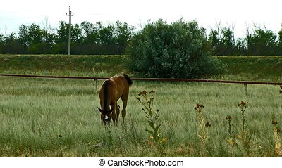 Alone horse eating at a rural field High definition footage...