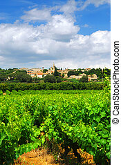 Vineyard in french countryside - Rows of green vines in a...