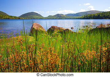 Acadia Lake Maine - Lake viewed through tall grass from...