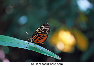 Brown Longwing Butterfly - A Brown Longwing butterfly on a...