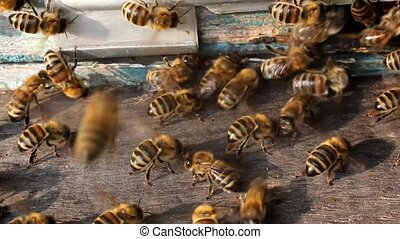 Movement of bees wings create air currents. Because they...
