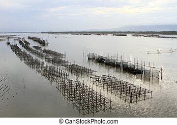 Shellfish farm, Thailand