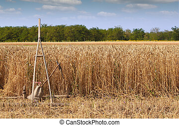 wheat field with old wooden rake