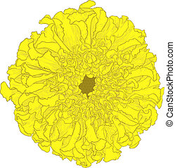 Vector marigold flower - Yellow marigold flower Tagetes...