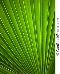 Green leaf Line background abstract of nature