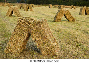 Field of stacked hay bales on farm - Farm field with hay...