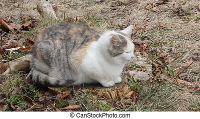 Feral Cat - Pregnant Feral cat, about 8-10 months old,...