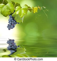 grupo, uvas, campo, tensão, verde, fundo,...