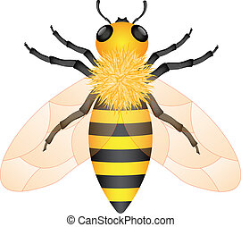 Honey bee - Illustration of honey bee isolated on white...