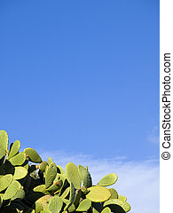 Prickly Pears - Mediterranean prickly pear leaves over blue...