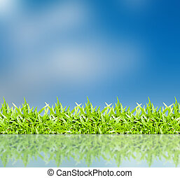 The grass with a blue sky