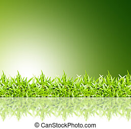 green grass frame isolated on green background
