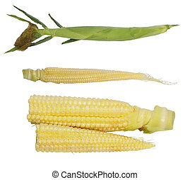 Set ear of young corn isolated