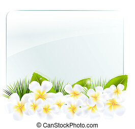 Glass Frame With Frangipani, Isolated On White Background,...