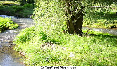 small river in a park