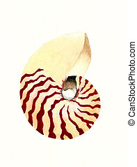 Nautilus - Watercolor Painting of a Nautilus Shell