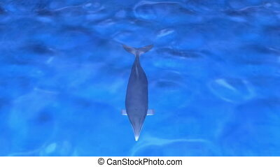 dolphin - swimming dolphin
