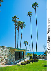 Exotic park in Santa Monica - Exotic palm in Santa Monica in...