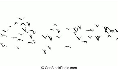 flock of birds fly over,migratory birds.