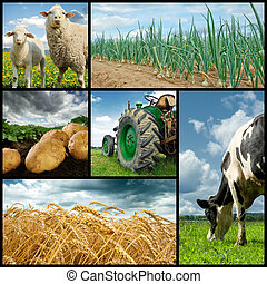 Agriculture collage. Cow, sheeps, wheat, onion, potato,...