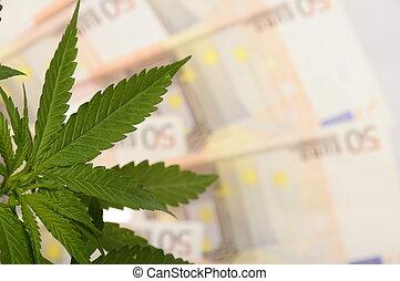 cannabis, plante, lot, Euro, argent, drogue