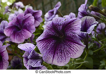 Flowers - A flower is a modified, shortened and limited the...
