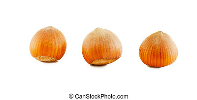 Three hazelnuts in shell - Three dried hazelnut filberts in...