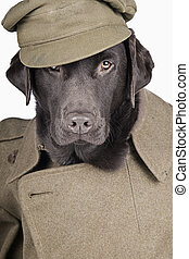 Labrador in Army Uniform - Sgt Labrador in Army Uniform