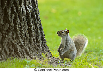Little Squirrel - A small squirrel at the base of a tree...